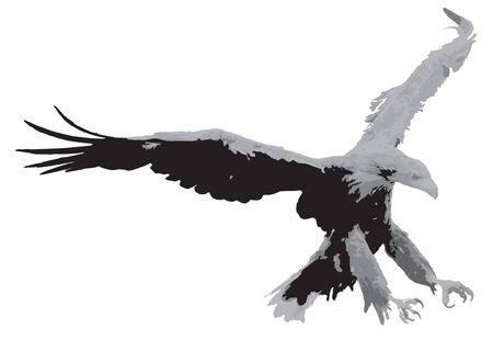 American Eagle Graphic