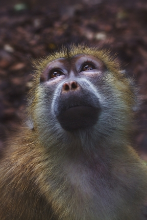 Monkey Stock Photo - 15323789