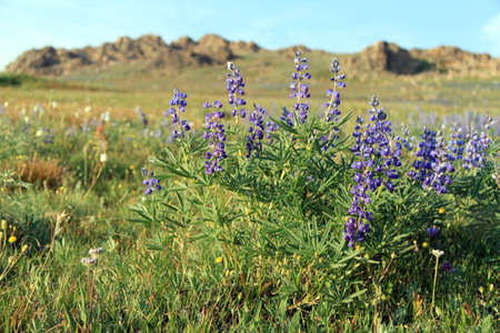 mountain flowers in valley color and liven surroundings photo