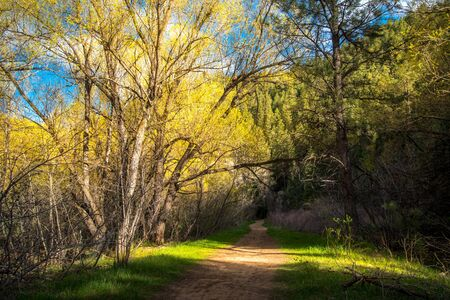 road and path through: Nature trail leading into a forest during sunset.