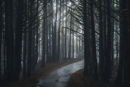Misty forest road.