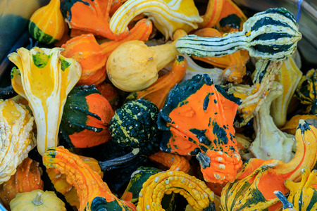 Assorted yellow, orange, and green gourds Stock Photo