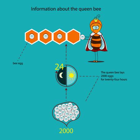 queen bee: Informaci�n sobre la abeja reina hecha en forma de infograf�a Vectores