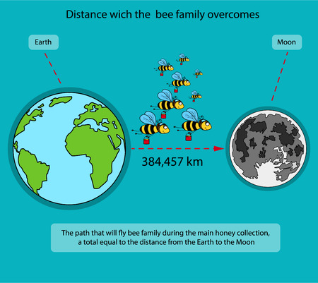 overcome: The information poster containing information on what way make bees during the main honey collecting. Bees fly by huge distances and work much to extract honey.