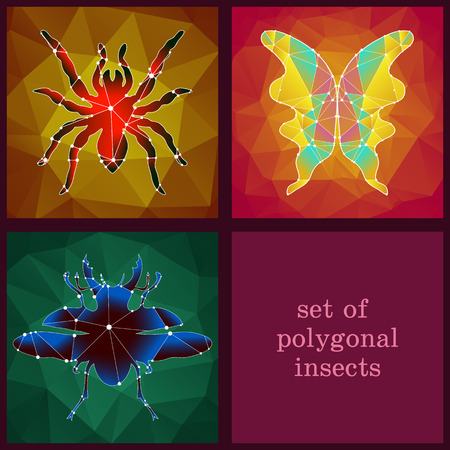 set with polygonal insects living in the wild
