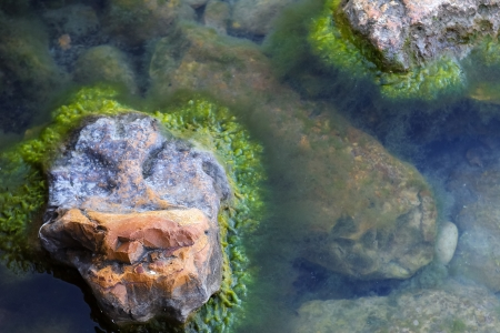 Sea stones covered with algae on the shore photo