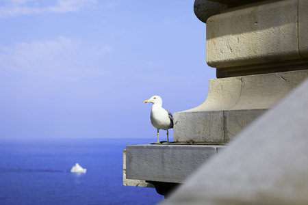 The seagull in Monaco on a background of a marine landscape photo