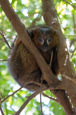 Mouse Lemurs are the world photo