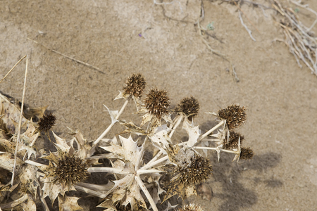 Dried grass in the sand on the beach Stock Photo