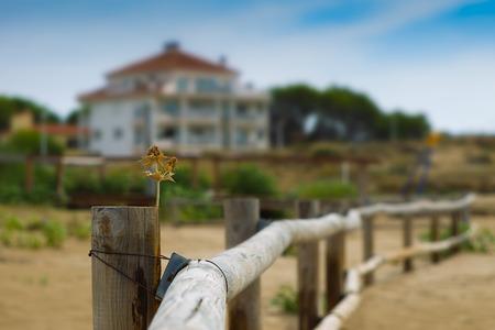 spiny: Dry spiny flower on a Dim background landscape