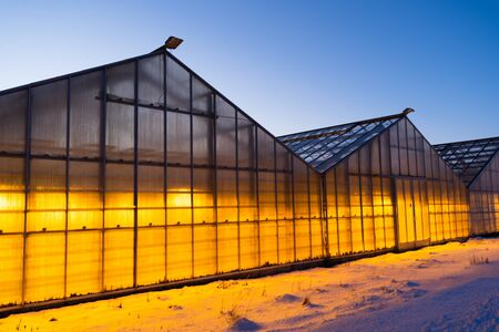 Thanks to the geothermal hot water Iceland is able to grow plants all year long even in the winter time when it is always dark and cold. Growing vegetables, fruits and flowers in Iceland. Stock fotó