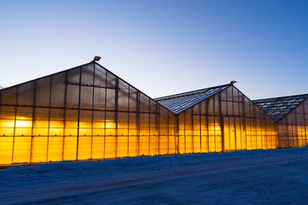 Thanks to the geothermal hot water Iceland is able to grow plants all year long even in the winter time when it is always dark and cold. Growing vegetables, fruits and flowers in Iceland.