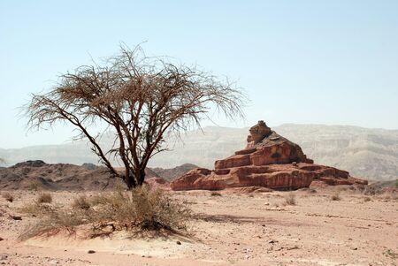 timna: Timna national geological park (Israel) The Mushroom and the half sandstones in the Negev desert