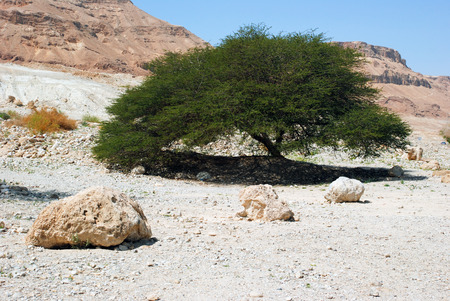 timna: Timna national geological park (Israel) The Mushroom and the half sandstones in the Negev desert