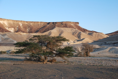 arava: Makhteshim Mitzpe Ramon. Small Machtesh (Crater) Israel. Negev Desert. Spring in the desert. Land a variety of colors. Old grate acacia tree in stony desert reserve, Israel Stock Photo