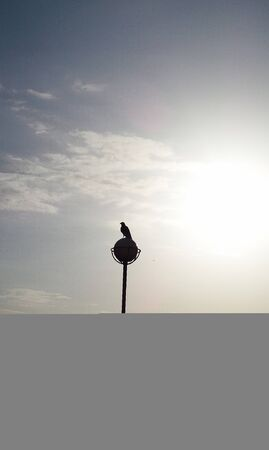 Bird sitting top of the old street lamp