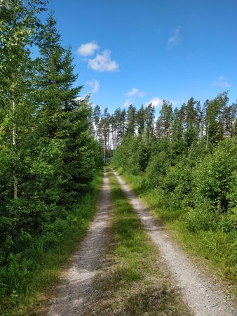 Road in the forest, midsummer in Finland