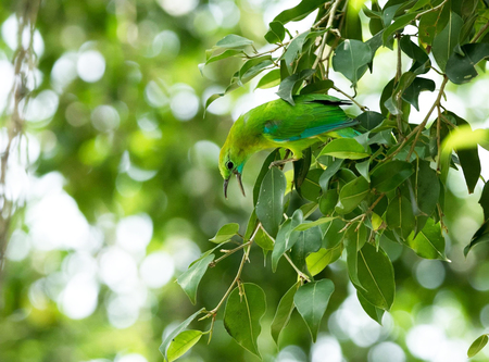 going places: Green bird on a tree branch nature copy space Stock Photo
