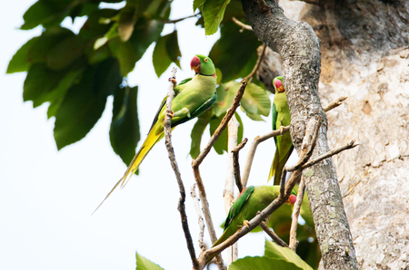 going places: Green bird on a tree branch. Stock Photo