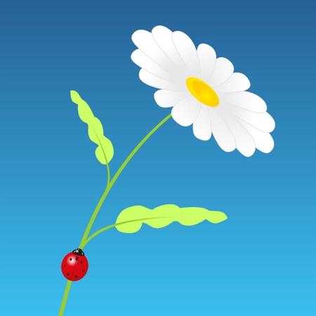 springtime: The daisy with the ladybird