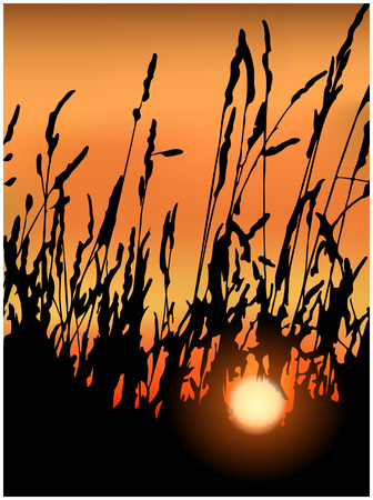 grass blades: The blades of grass at sunset