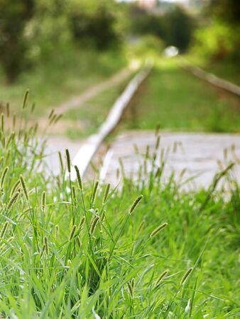 Green Fresh Summer Grass On Old Useless Railway  Stock Photo - 4044615