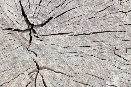 Texture of rough surface felled tree cracked weathered with annual rings and two crosses. Concept of long life longevity aging. A background with copyspace of gray stump wood. Archivio Fotografico