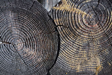 Charred vintage wood burnt log stump slice. Selective focus burnt resinous wood glowing texture of rough surface felled tree weathered with annual rings over out of focus log cabin joinery carpentry.