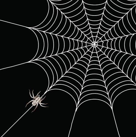 Araignée et un site web sur un arrière-plan noir