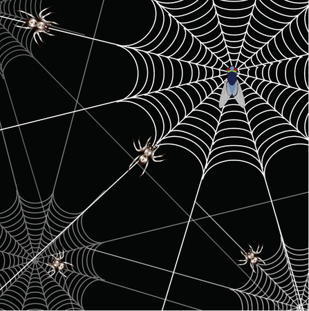 spidery: bat and a web on a black background Illustration
