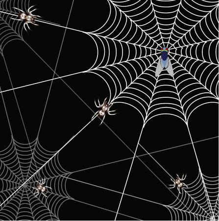 bat and a web on a black background Illustration