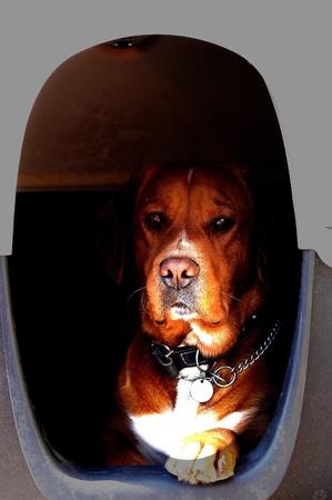 alarming: organismo de control en su perrera