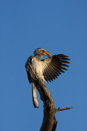deployed: Hornbill of Africa showing the way