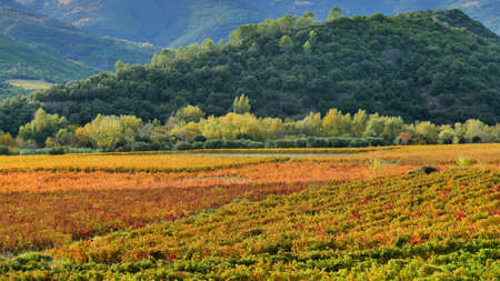 The Saint-Chinian Roquebrun vineyard in autumn