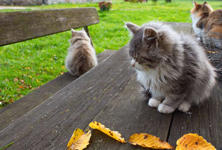 Three furry cats sit on a wooden outdoor table and bench