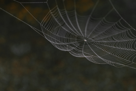 Hanging spider web in front of the brown and blurry nature background. One part of spider web is in focus, other is blurred