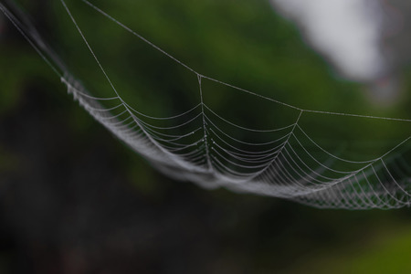 Hanging spider web in front of the green and blurry nature background. One part of spider web is in focus, other is blurred Stock Photo