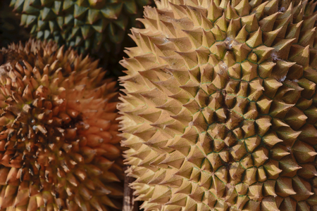 Background surface of spiky durian fruits