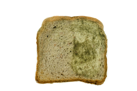 One slice of white bread with mold isolated on white background Stock Photo