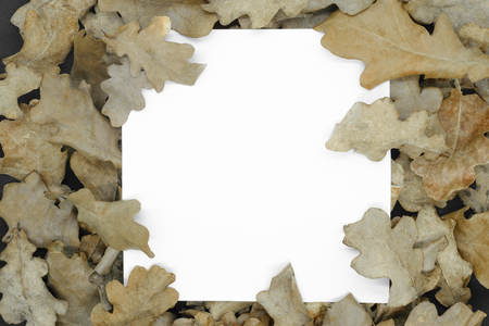 Autumn concept. Dry brown oak tree leaf background with white square copy space in the middle of composition