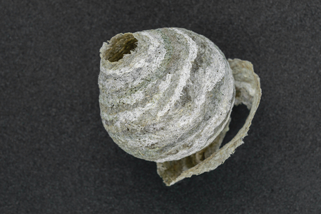 Round, gray and abandoned wasps nest on grey background Stock Photo