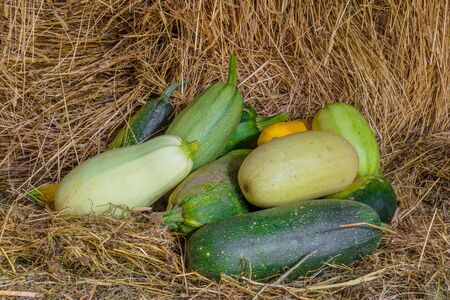 Background composition of various types of squash and zucchini on straw 免版税图像