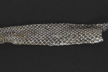 Part of old dropped grass snake (lot. Natrix natrix, ringed snake or water snake) skin on black background surface with copy space 스톡 콘텐츠