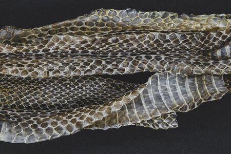 Part of old dropped grass snake (lot. Natrix natrix, ringed snake or water snake) skins on black background surface