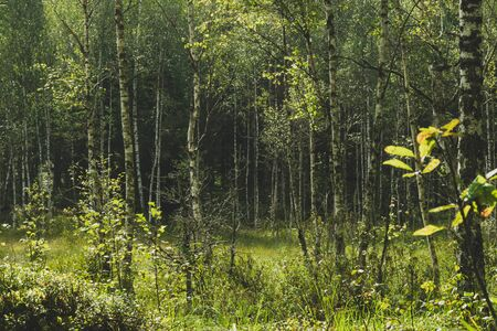 Green marshes in old woods during early summer morning time