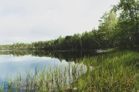 Wild, calm and black lake in the middle of the woods during early summer morning