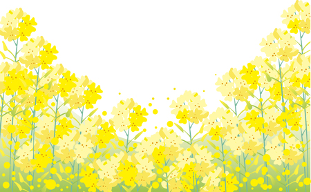 Rape blossom background Illustration