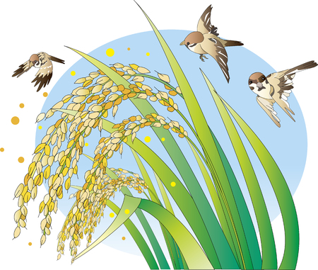 Rice and Sparrow Illustration