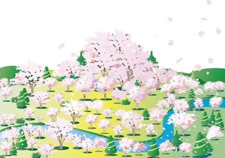Cherry blossoms of flowering blooming hills