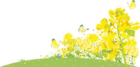Flores de colza Ilustración de vector
